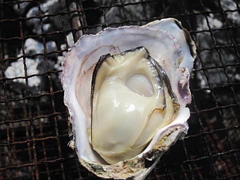火 ば あたら ない 通せ 牡蠣 を